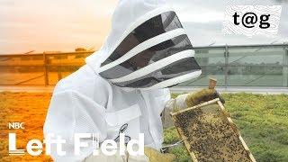 Bees Bring Buzz as Urban Hives Grow in Detroit   NBC Left Field thumbnail