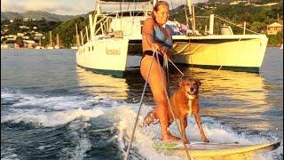 HIDDEN CAMERAS and a SURFING DOG! | Dog Vlog