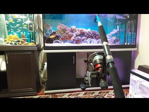 OLTA İLE BALIK BESLEMEK :), Akvaryum Balıkları, Smart Aquarium Fish