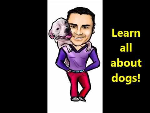 Trying out a Channel Trailer - Dog training, care, health, relationship and much more!