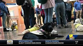 Camden and Future Guide Dog Puppies Visit Naval Museum