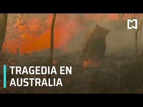 En Australia, combate a incendios forestales es insuficiente - Despierta