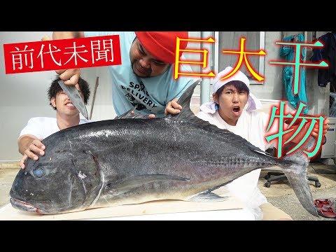 GT捌いて、日本最大のアジの干物(121cm)が作りたい!