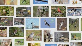 La semaine verte | Comment nomme-t-on les oiseaux?