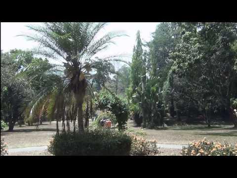 Paradeniya, Królewski Ogród Botaniczny (foto)