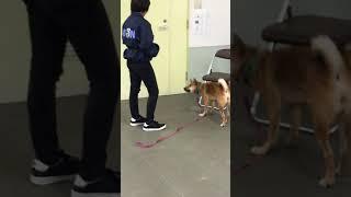 動物専門学校 トリマー 動物看護師 アクアリウム 動物のお仕事 動物系学科1年生のクリッカートレーニング⑥ thumbnail