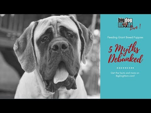 Feeding Giant Breed Puppies - Big Dog Mom Facebook Live