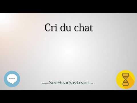 Cri Du Chat 🔊
