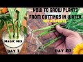 How to Grow Plants From Cuttings in Water (95% Success Rate) / SPECIALLY FOR BEGINNERS