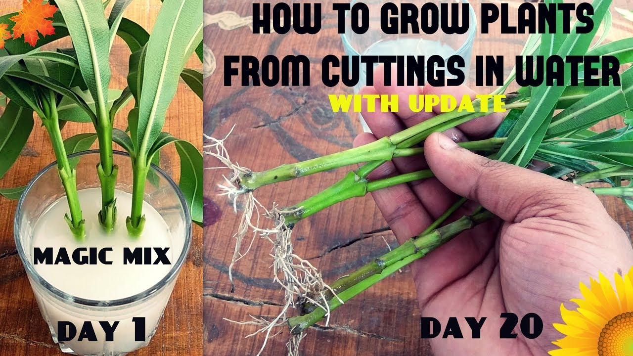 How to Grow Cuttings from Established Plants How to Grow Cuttings from Established Plants new photo