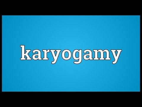 Header of karyogamy