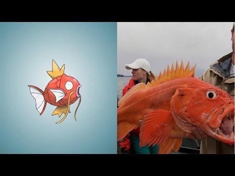 8 Con Pokemon Bạn Có Thể Bắt trong ĐỜI THỰC | Khoa Học Huyền Bí