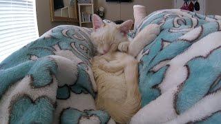 骨折父ちゃん癒やす白猫、笑顔で足に添い寝して