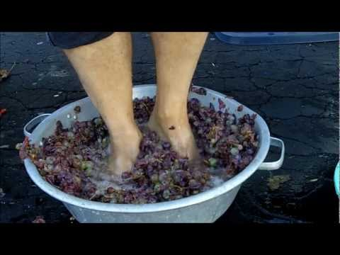 Making Grape Juice