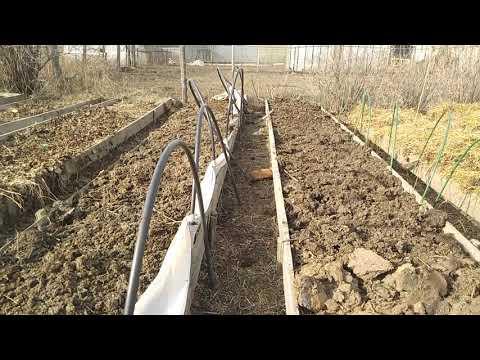 Как посадить клубнику, после клубники// Ягодный Огород