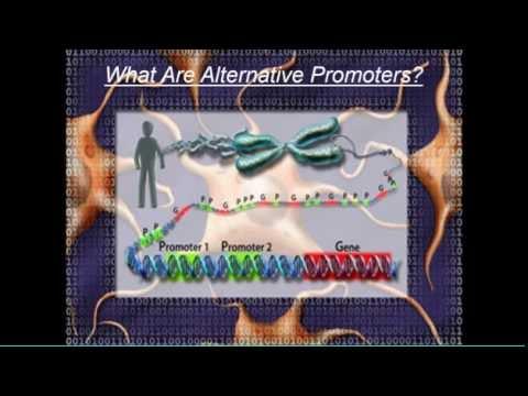 MLGN 301 2016: Lec3 Alternative Molecules 1 Alternative Promoters