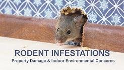 Rodent Infestations, Property Damage & Indoor Environmental Concerns