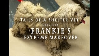 Emergency Dog Grooming - Matted Dog Soaked in Urine