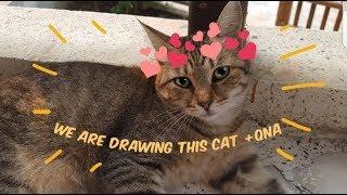 Drawing a Kawaii Turkish Street Cat???? ❤️+ Q&A