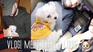 vlog-meet-little-louie