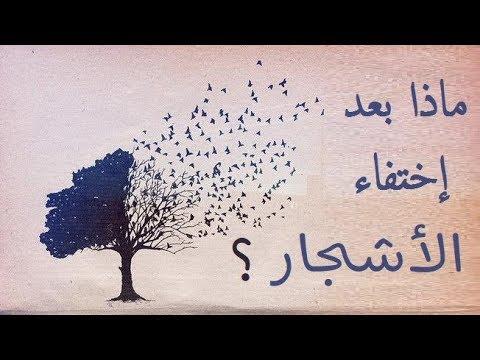 ماذا لو اختفت الاشجار ؟