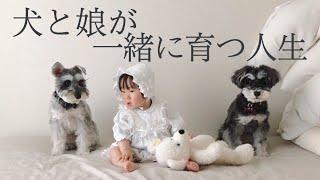 【犬の赤ちゃん育児】生後10ヶ月の娘とわんちゃんたち+おまけイノシシトト