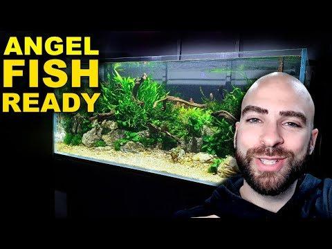 4ft ANGELFISH JUNGLE AQUARIUM: READY FOR FISH!!! + CO2   MD FISH TANKS