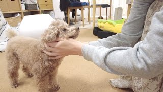 【ご報告】新しい子犬の家族をお迎えすることになりました。