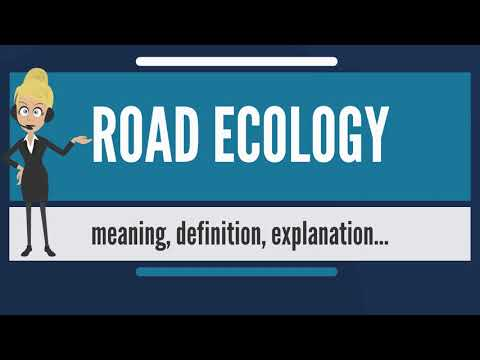 What is ROAD ECOLOGY? What does ROAD ECOLOGY mean? ROAD ECOLOGY meaning & explanation