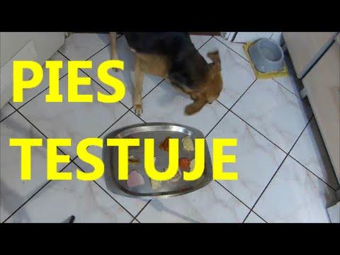 Wesołych świąt świąteczne Potrawy Testuje Pies Filmy Kulinarne