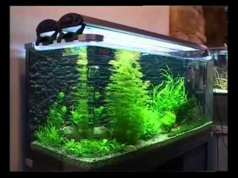 Дизайн 300 литрового аквариума своими руками