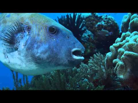 DIVING CRUISE INDONESIA - Raja Ampat - BANDA SEA - APRIL 2016