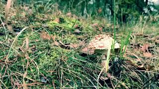 Gombák kezelése Prostatitis A prosztata gyulladás kezelése népi jogorvoslatokkal