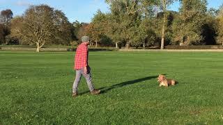 Dublin, Malahide - Dog training, obedience