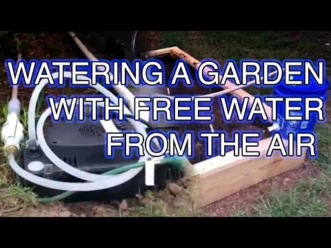 Free water from the air, and my self watering raised garden bed.