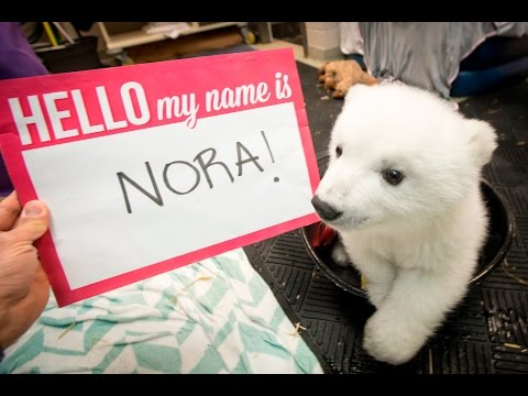 Nora The Polar Bear Cub Gets Her Long-Awaited Name!