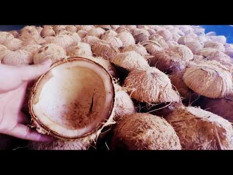 """Ganggangan"" Coconut or Copra Dryer: Camiguin Philippines"