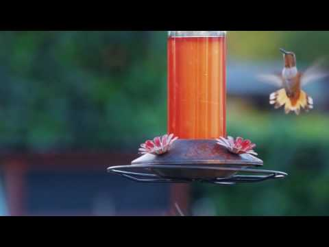 Hummingbirds at the Van Nuys Filling Station HD online video cutter com