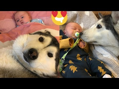 My Husky Knew She Would Always Be Mummy To My Baby [TRY NOT TO SMILE]