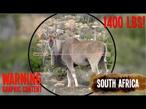 Hunting Eland With A 45 Cal Air Rifle!