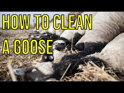How To Clean A Goose