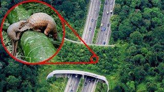 Most AMAZING Animal Bridges Around The World!