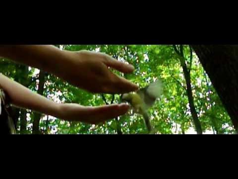 Видео Синицы едят с рук замедленная съёмка  Санкт Петербург Елагин остров