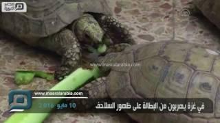 مصر العربية | في غزة يهربون من البطالة على ظهور السلاحف