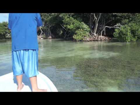 Ocean Academy Fly Fishing Class Caye Caulker, Belize