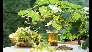 Teiul - Remediu pentru Bolile Trupești și Sufletești ( Leacuri&Sfaturi Despre Sănătate )