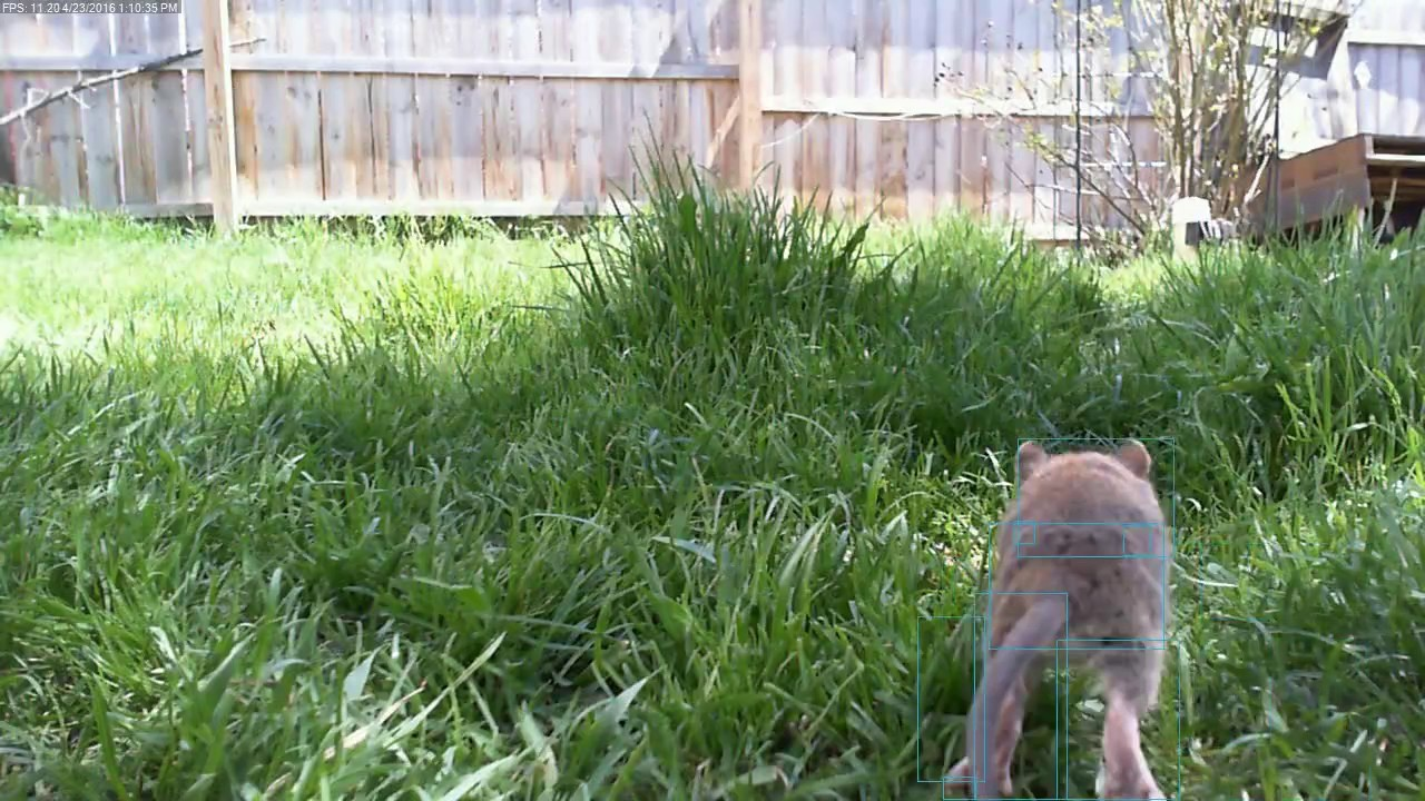 Norwegian Brown Rats in backyard. 13:03:08 - YouTube