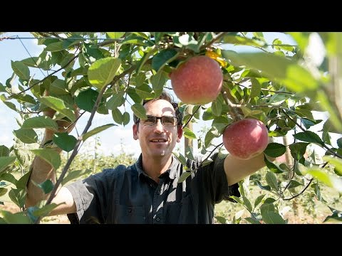 Extension experts help the state's cider industry grow - Virginia Tech