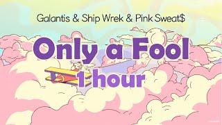 1 hour 🌴Only a Fool - 갈란티스, 쉽 렉, 핑크 스웨츠