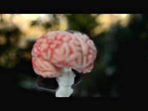 İnternet Üzerinden Yapılan Viral Pazarlama Nedir Nöropazarlama Nedir
